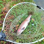 札幌、新千歳空港から近くてロケーションが最高!北海道を代表する管理釣り場『10pound』(実釣編)